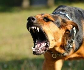 Proteção Contra Ataque De Cães