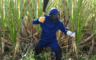 Acidentes de trabalho no campo podem ser evitados com o uso de EPIs
